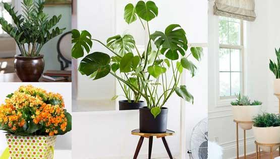 Plantes-interior