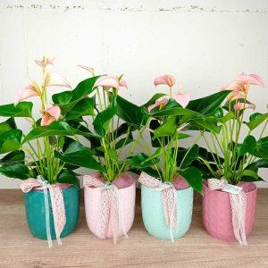 anturium-ceramica-floristeria-les-flors-igualada-dia-de-la-mare