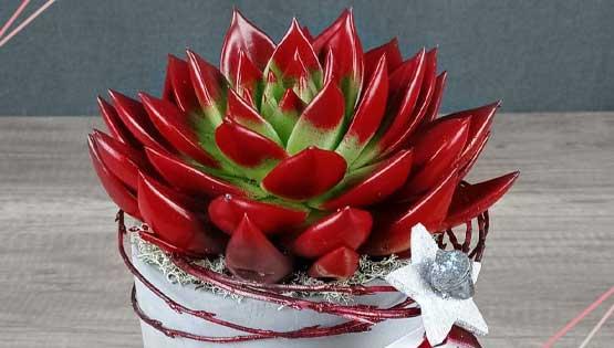 cactus-top-vendes-les-flors-igualada