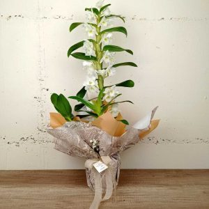 dendrodium-flors-exotiques-ram-floristeria-les-flors-igualada-dia-de-la-mare