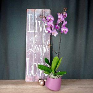 orquidea-lila-maceta-ceramica-floristeria-igualada-les-flors