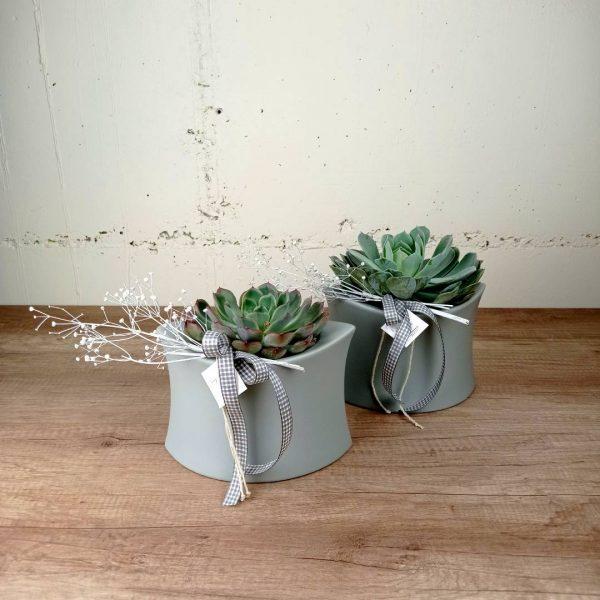 crassa-cactus-torreta-planta-interior-les-flors-igualada
