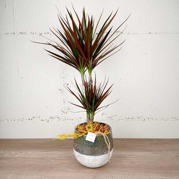 marginata-torreta-ceramica-les-flors-floristeria-igualada