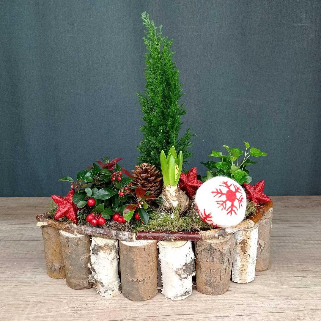 avet-arbusto-fruits-vermells-fusta-toncs-plantes-floristeria-les-flors-igualada