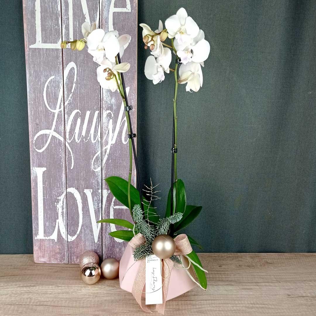ballerina-orquidia-planta-floristeria-les-flors-igualada