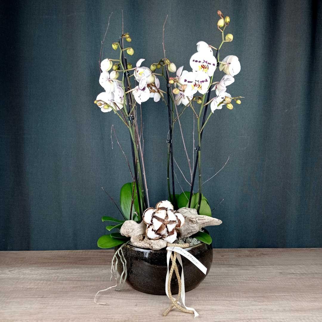 orquidea-ceramica-planta-floristeria-les-flors-igualada