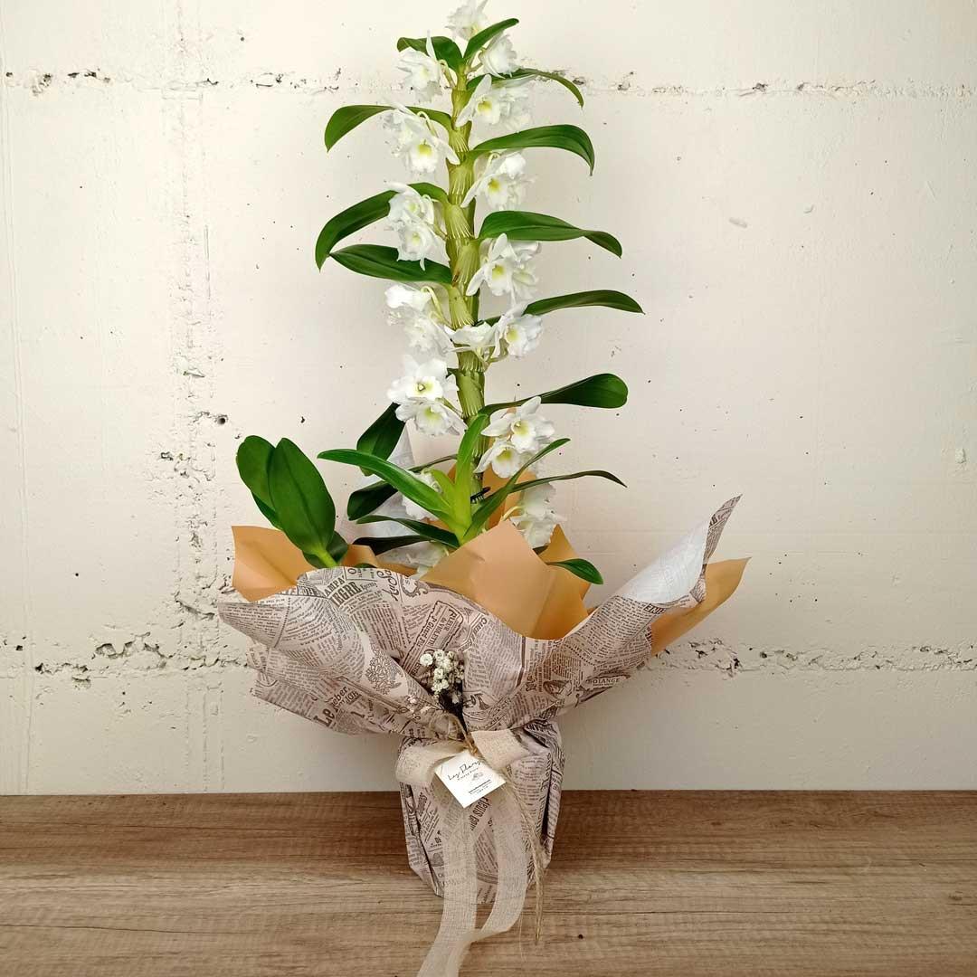flors-exotiques-ram-floristeria-les-flors-igualada-dia-de-la-mare