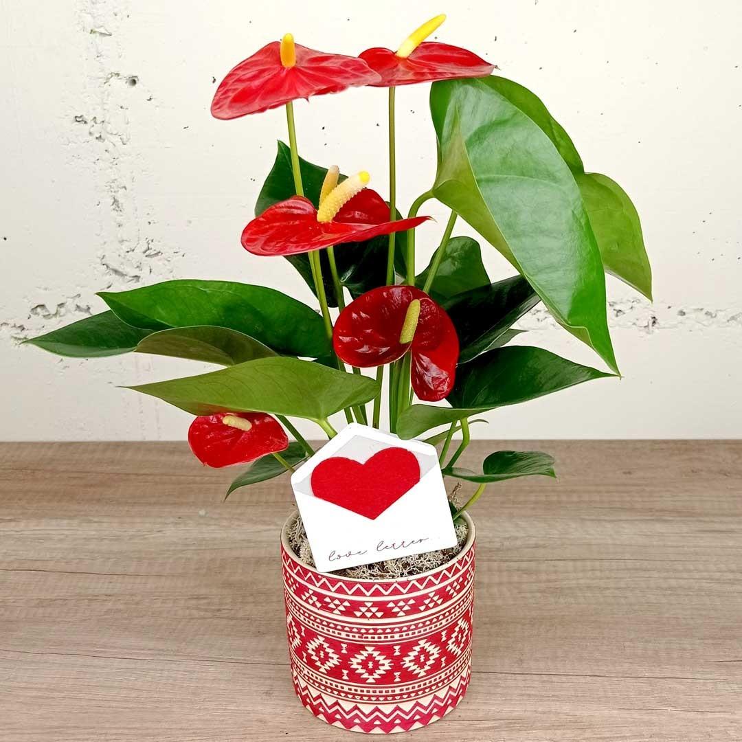 anturium-ceramica-red-love-sant-valenti-planta-floristeria-les-flors-igualada