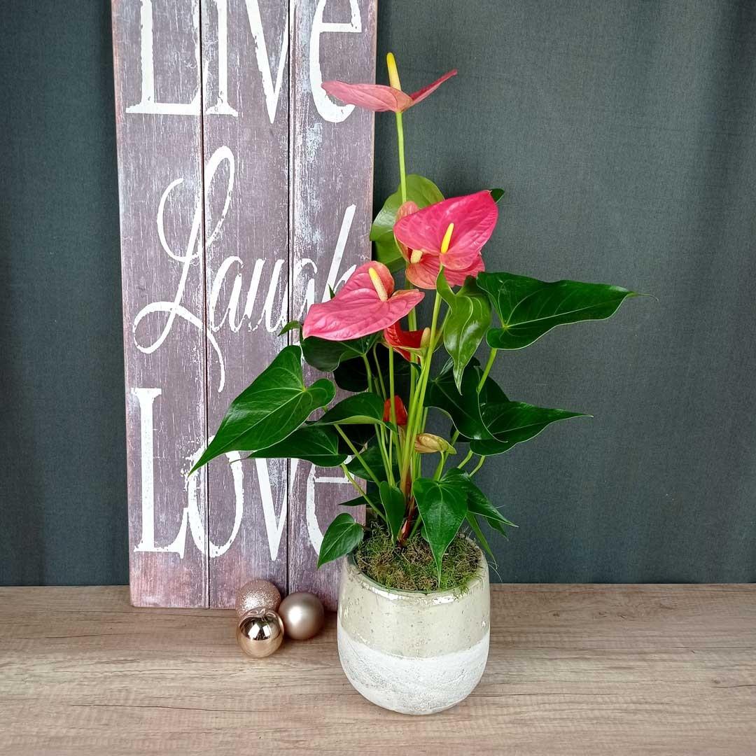 anturium-ceramica-planta-floristeria-les-flors-igualada