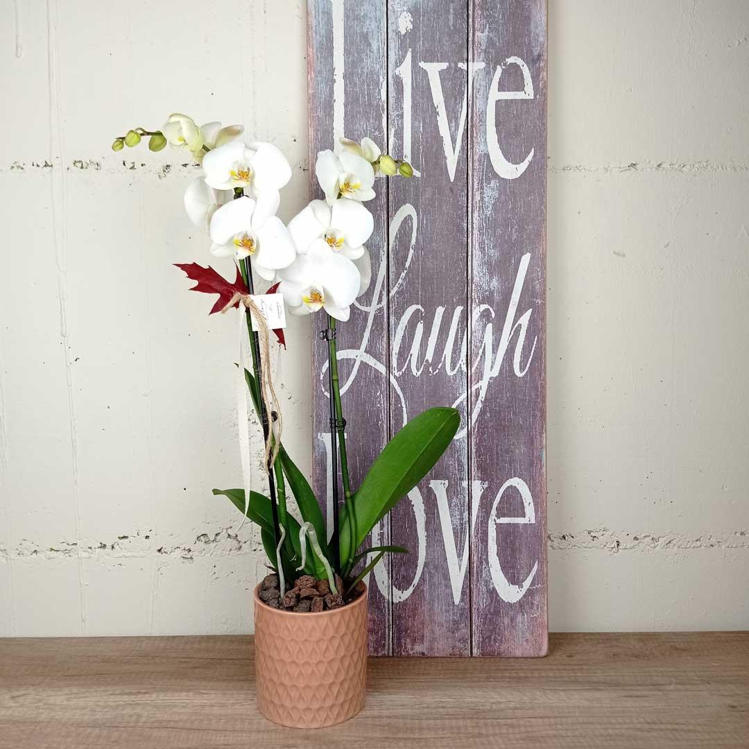orquidias-ceramica-floristeria-les-flors-igualada
