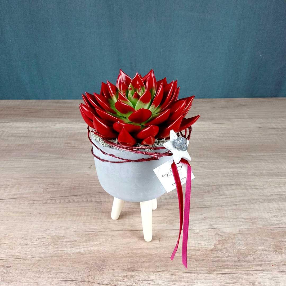 cactus-test-tres-potes-floristeria-les-flos-igualada